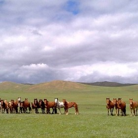 who is looking at who on mongolian steppe