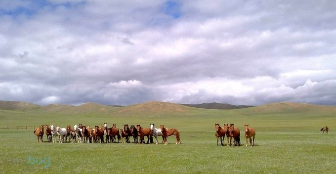 horses by Niqueki - Unforgettable Landscapes Photo Contest by Zenfolio