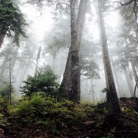 I took this image on a foggy afternoon on one of Cyprus Mountains many trails.  It was mid September, and being in Vancouver, it had rained for m...