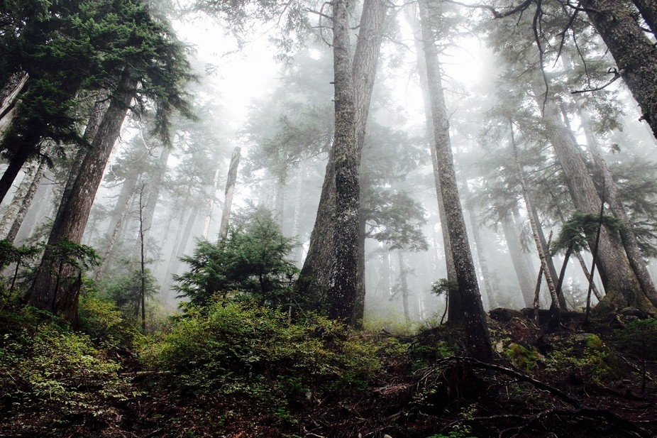 I took this image on a foggy afternoon on one of Cyprus Mountains many trails.  It was mid Septem...