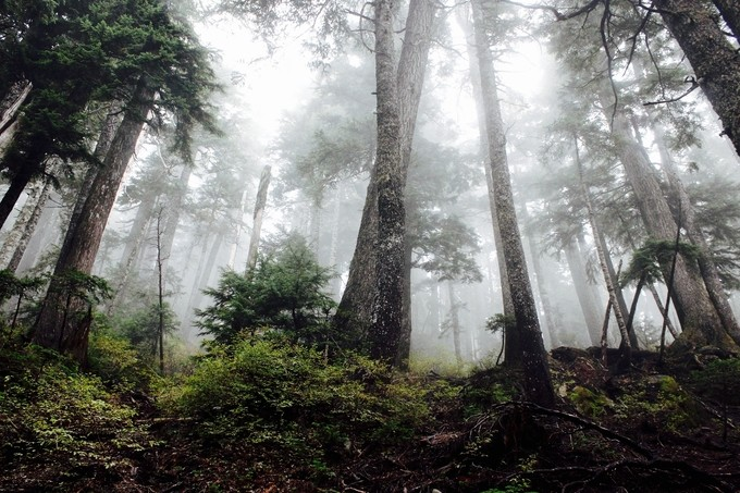 Mist-erious trees by kurtistoikka - Mist And Drizzle Photo Contest
