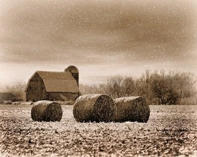 Winter Farmland