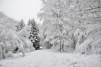 SNOW IN HAUTES FAGNES BELGIUM