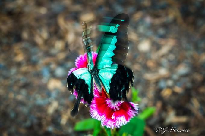 Fluttering Blue