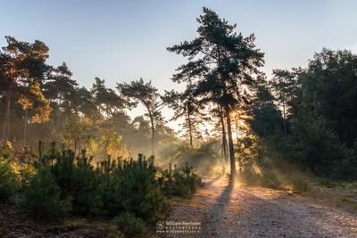 Bosserheide Sunrise