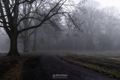 Misty Avenue Of Trees