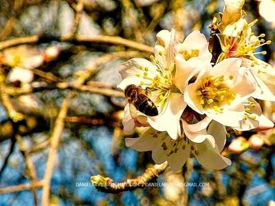 Cardal do Douro -  Bee
