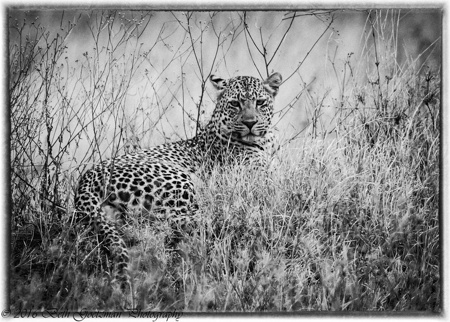 leopard taken on in Serengeti National Park, Tanzania