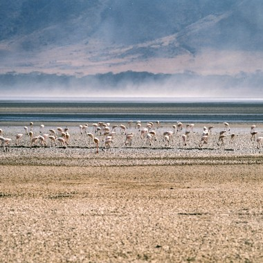 Flamingos at the Salt Flat