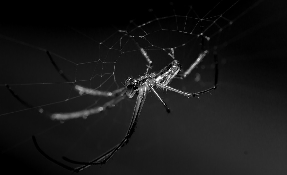 Black and white spider