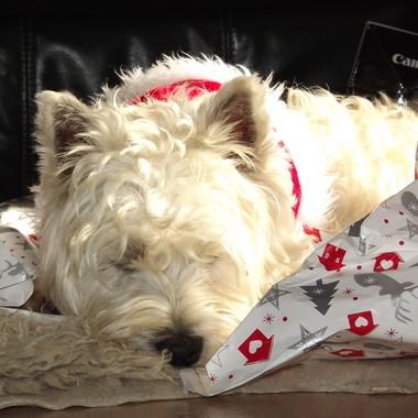 Christmas is soooo tiring.....