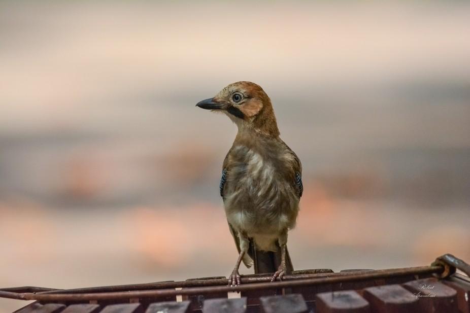 Birds of city!