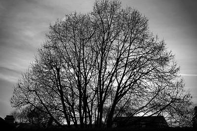 Winter Veins