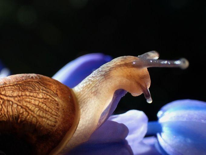 Snail. by evandebelt - Semitransparent Photo Contest