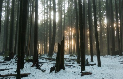 Enchanted Forest: Light My Way