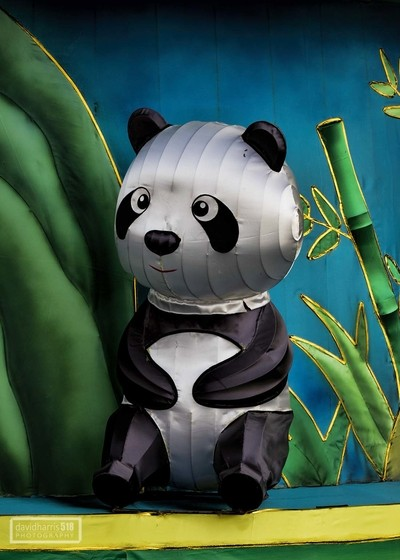 Gazing Panda