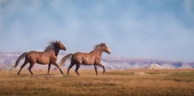 Wild Horses North Dakota