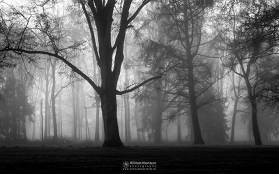 Misty Silhouettes Of Trees