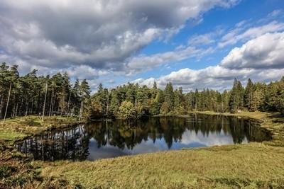 Tarn Howe, Lake District, U.K.