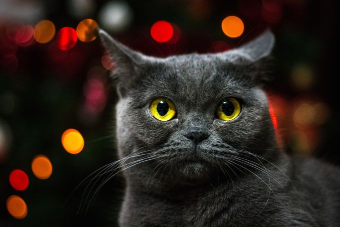 Luna & The Christmas Lights by whiteshipdesign - Night And Bokeh Photo Contest
