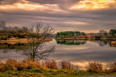 Evergreen Reflection