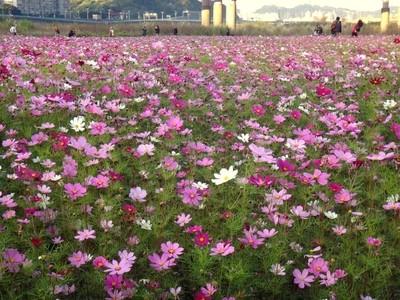 Walk on the flower
