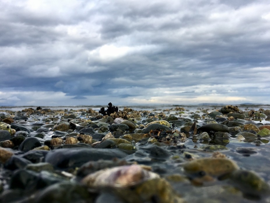 Taken at Rathtrevor Beach on Vancouver Island - a low perspective.