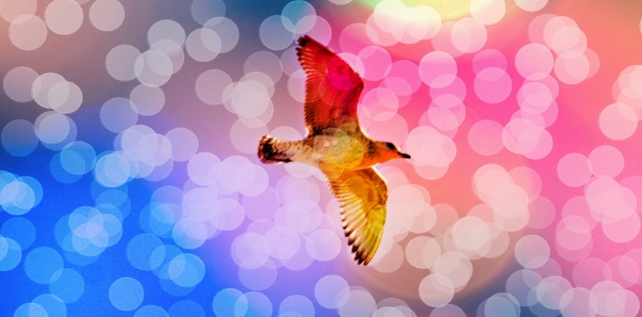 birds in flight have always given fancy of flight to people so maybe its simply soar on your dreams