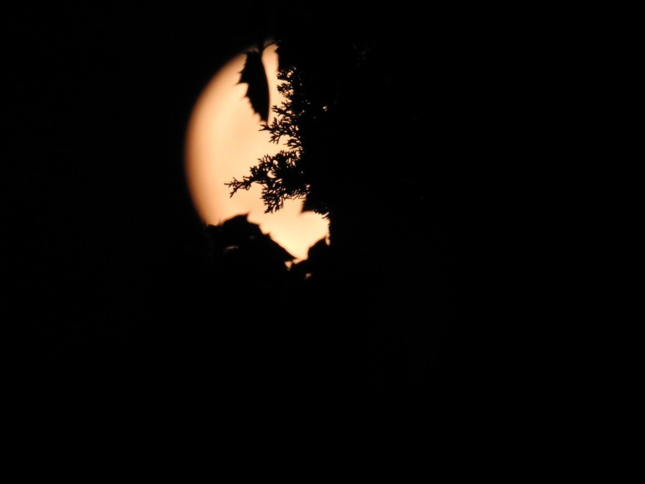 Loved this view of an orange moon and the plants that created this silhouette!