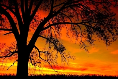 A Grand Old Tree at Sunset
