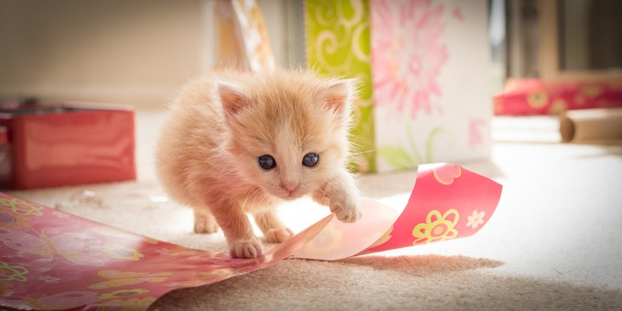 Kitten's Birthday by chrispegman - Cute Kittens Photo Contest