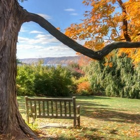 A bench beneath an old tree in the Wave Hill botanic garden, overlooking the Hudson River and the Palisades. Wouldn't you love to just spend...