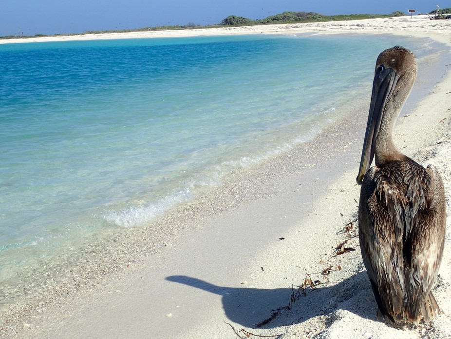 Hanging on the beach in the Dry Tortugas with my friend.