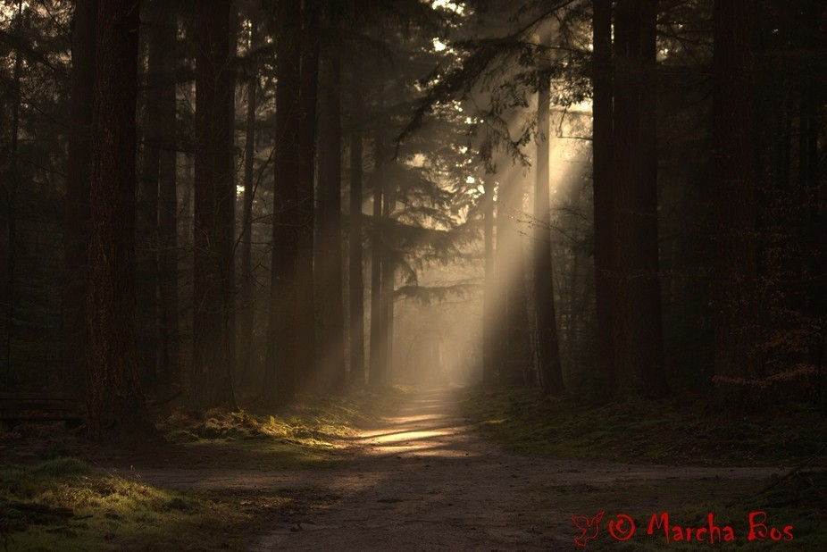 The Speulderbos (NL) is a magical forest, especially with fog and low sun.