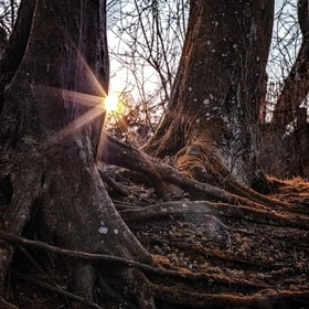Have you ever been to the woods at sunset? It is wonderful!