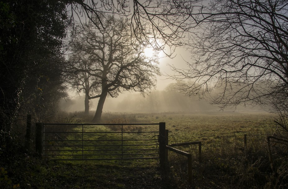 Early morning sunlight shines through the mist shrouding a meadow in Brandeston, Suffolk, UK.