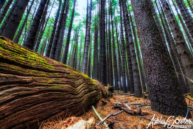 Along the forest floor by ashleysowter - Composition And Leading Lines Photo Contest