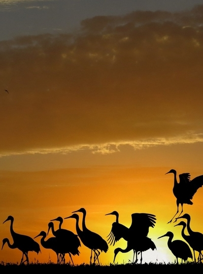 Cranes In November