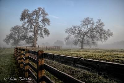 Jus A Foggy Mornin in Cali...