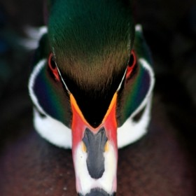 Martin Mere Wetlands and Wildfowl Trust Near Ormskirk UK