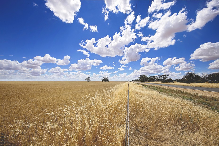 Wheat Country