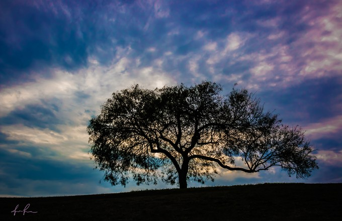 lonet by Jlifox - A Lonely Tree Photo Contest