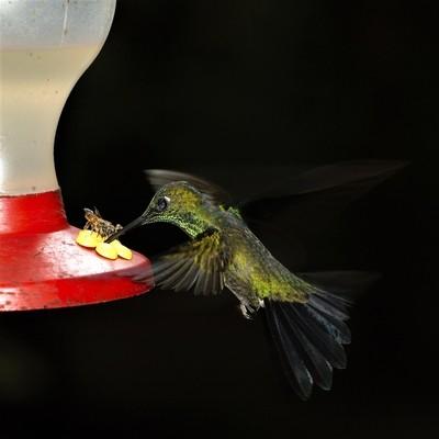night kolibri