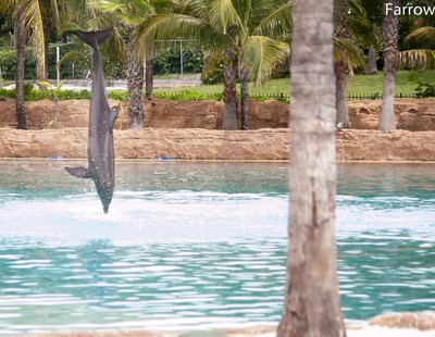 Dolphin vertical