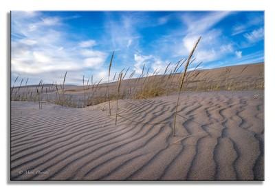 Winter Michigan Dune Tracings