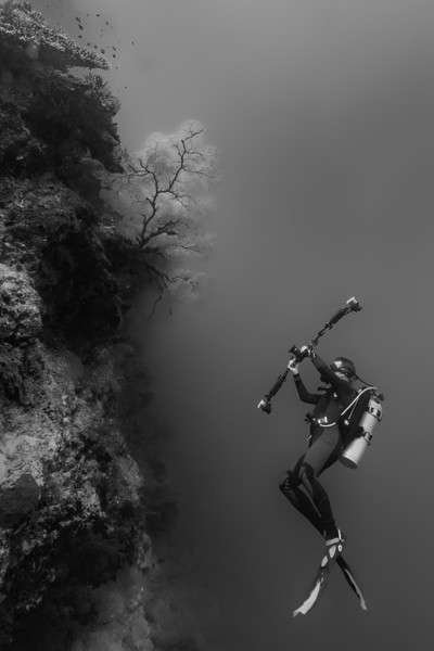 The Underwater Photographer and the Seafan
