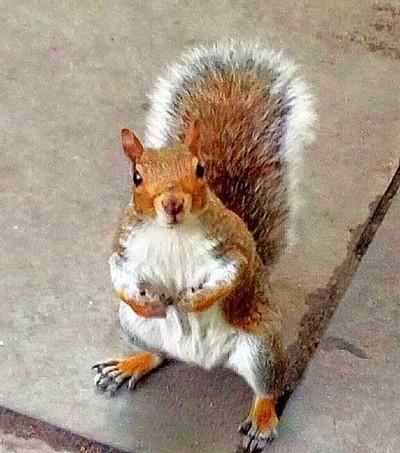 Closeup Squirrel