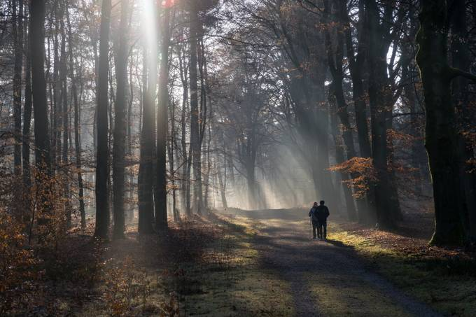 Winter in Holland by Edmael - Mist And Drizzle Photo Contest
