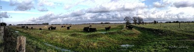 Cows and Clouds..Cant Go Wrong With That...