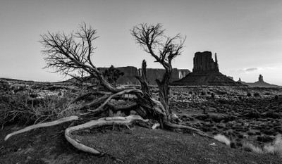 Monument Valley Tree B&W